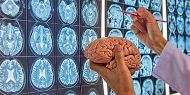 Neurociências e Educação